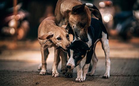 собаки сайт